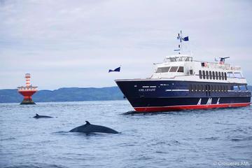 Excursión de un día Rivière-du-Loup y crucero de avistamiento de...