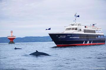 Rivière-du-Loup Day Trip and Whale-Watching Cruise from Montreal