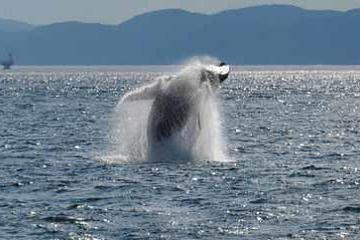Rivière-du-Loup-Tagesausflug und Bootsfahrt mit Walbeobachtung ab...