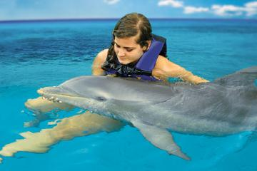 Dolphin Cove Adventures from Montego Bay