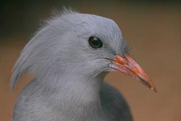Bird and Wildlife Tour from Noumea