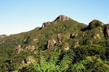 Excursão à ilha Great Barrier, incluindo voo de retorno a Auckland