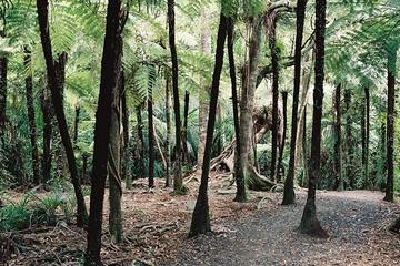 Excursão terrestre por Auckland: Excursão pelo litoral e floresta...