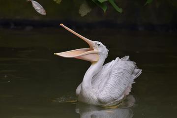 Langkawi Wildlife Park Admission...