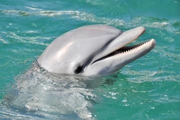 Croisière d'observation des dauphins depuis l'Aquarium de Floride à...