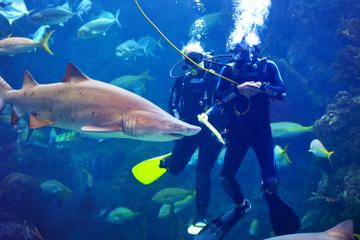 Mergulhe com os tubarões no Aquário da Flórida em Tampa Bay