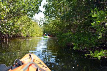 The Florida Aquarium Kayak Adventure