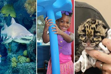 Trois merveilleuses attractions pour un excellent prix avec le Tampa...