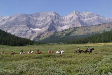 Half-Day Horseback Trail Ride in Kananaskis