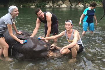 Bath and Wash Sumatran Elephants from...