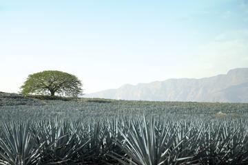 Tequila Half-Day Tour: Horseback Riding, Agave Fields and Tasting