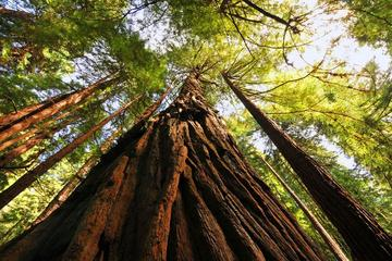 Small Group Muir Woods and Sausalito Tour