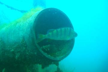 Guided Dive in Lake Geneva for Certified Divers