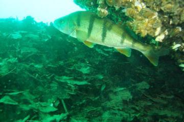 PADI Discover Scuba Diving Course from Geneva