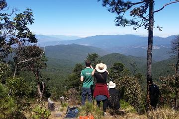 Sierra Norte Oaxaca Day Trip: San Isidro Flat and Tule Tree