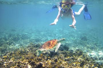 Excursão de Caiaque em Turtle Recife