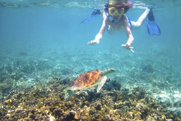 Tour en kayak du récif des tortues