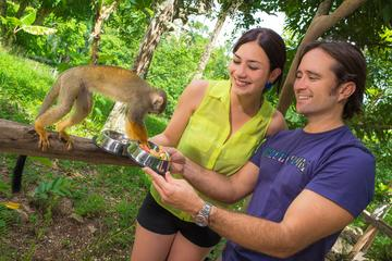 Monkey Land Half Day Safari