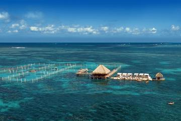 Reef Explorer Half Day Trip