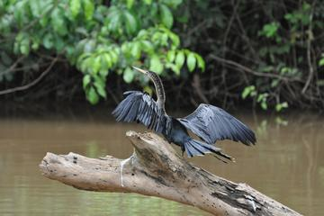 Caño Negro Wildlife Refuge Day Trip from Arenal