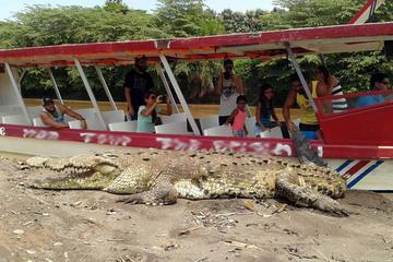 Crocodile and Wildlife Adventure from Jaco