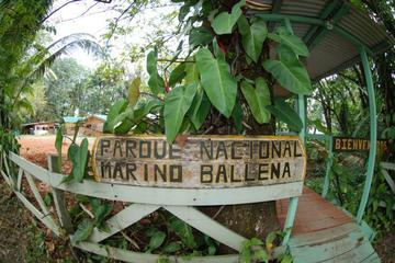 Marino Ballena National Park Hike and Wildlife Watching Tour at Puntarenas