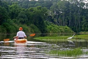 Nosara guided bird watching wildlife hike and kayak tour in Guanacaste