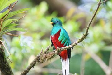 San Gerardo de Dota and Savegre river bird watching and nature guided cloud forest tour at Talamanca
