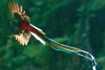 Savegre guided quetzal and wildlife observation tour at Talamanca