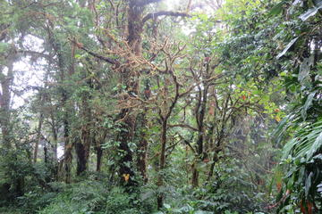 Monteverde Cloud Forest Hike from...