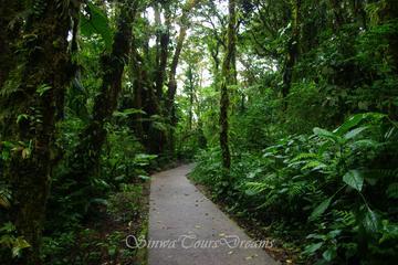 Santa Elena Cloud Forest Reserve Walk