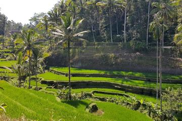 Private Tour: Ubud Highlights Including Monkey Forest and Tegalalang...