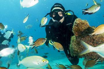 4-Dive Scuba Adventure in...