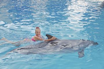 Nage avec les dauphins à Ocho Rios