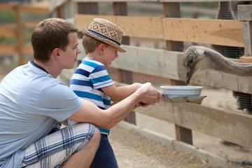 Paseo en camello y recorrido por la plantación