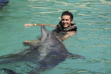 Programa definitivo de baño con delfines en Ocho Ríos