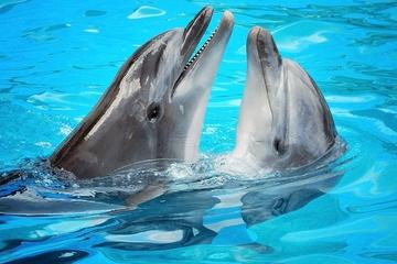 Programa Encuentro con delfines en Ocho Ríos