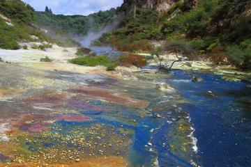 Geotermisk förmiddagstur i liten grupp i Rotorua
