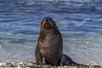 Small-Group Seal Colony and...