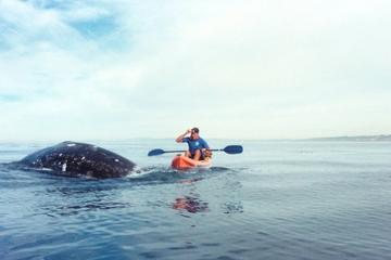 La Jolla: Kajakfahrt mit Walbeobachtung
