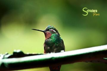 Canopy - Butterflies - Hummingbirds from Monteverde