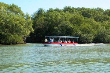 Damas Island Mangrove Discovery Tour by Boat from Manuel Antonio