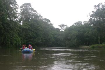 Floating Safari Tour from Puerto Viejo of Sarapiquí