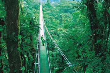 Hanging Bridges and Insect Museum from Monteverde