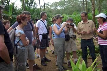 Palmito Tour Plantation from Puerto Viejo of Sarapiqui