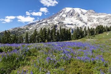 Private Tour: Mt Rainier Tagesausflug...