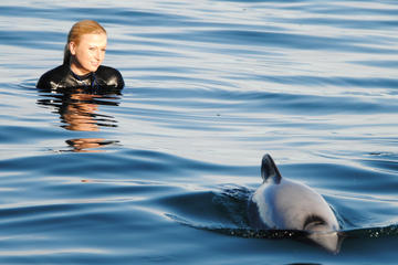 Akaroa-Ausflug: Schwimmen mit Delfinen im Akaroa Harbour