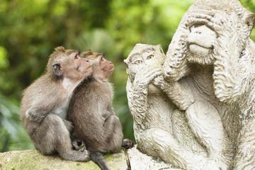 Middagtour naar Bali Monkey Forest ...