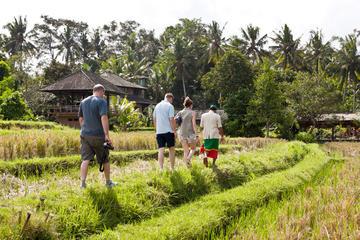 Rice Paddies Village Walking Tour