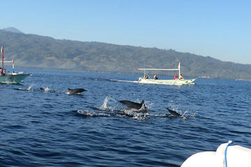 Small-Group Dolphin Watching, Waterfalls, and Ulan Danu Temple Tour from Bali